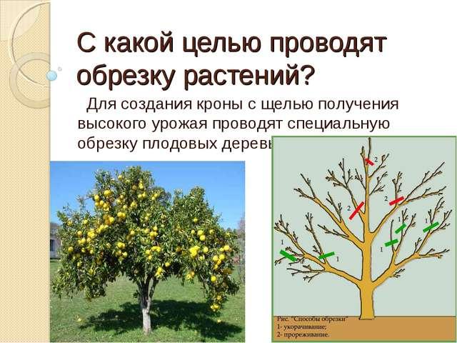 С какой целью проводят обрезку растений? Для создания кроны с щелью получения...