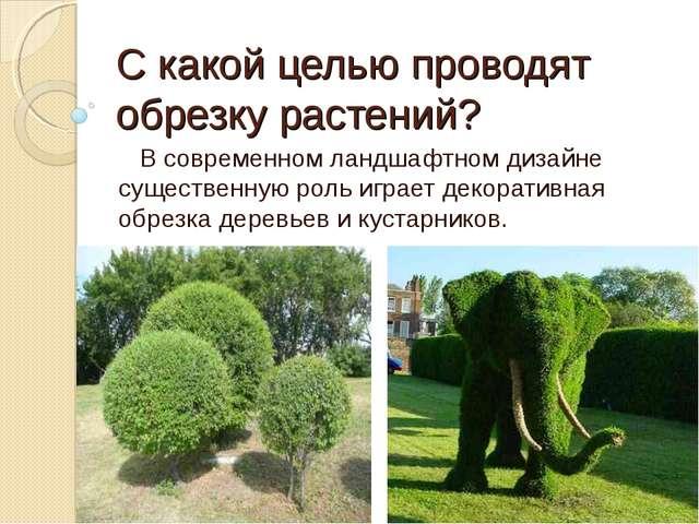 С какой целью проводят обрезку растений? В современном ландшафтном дизайне су...