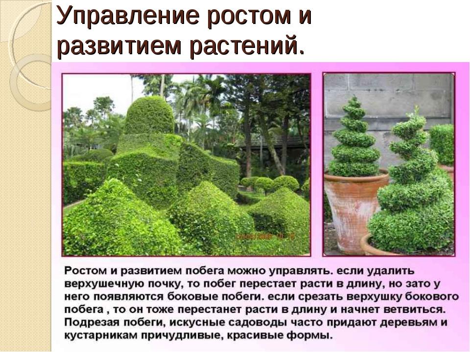 Управление ростом и развитием растений.