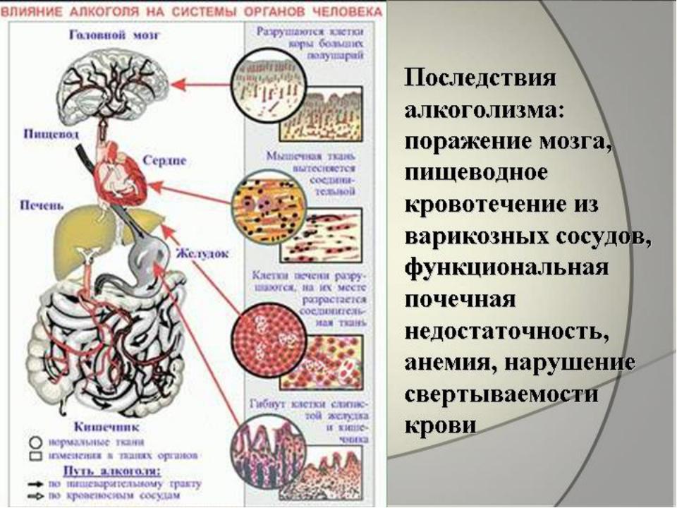 самые востребованные бесфинол а выводится ли из организма собрали