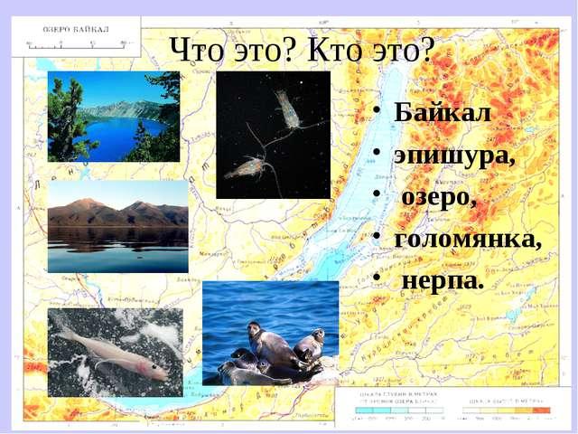 Что это? Кто это? Байкал эпишура, озеро, голомянка, нерпа.