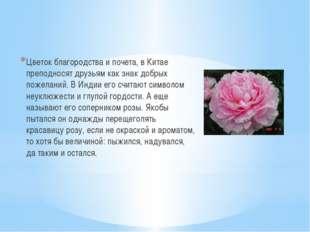 Цветок благородства и почета, в Китае преподносят друзьям как знак добрых по