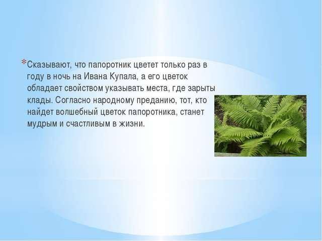 Сказывают, что папоротник цветет только раз в году в ночь на Ивана Купала, а...