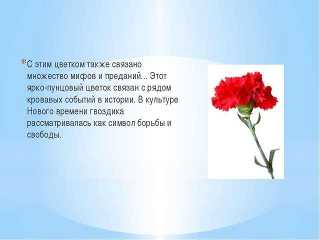 С этим цветком также связано множество мифов и преданий... Этот ярко-пунцовы...