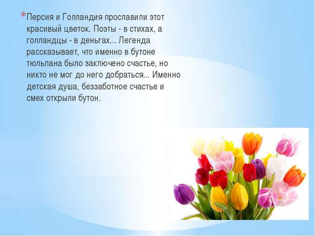 Персия и Голландия прославили этот красивый цветок. Поэты - в стихах, а голл...