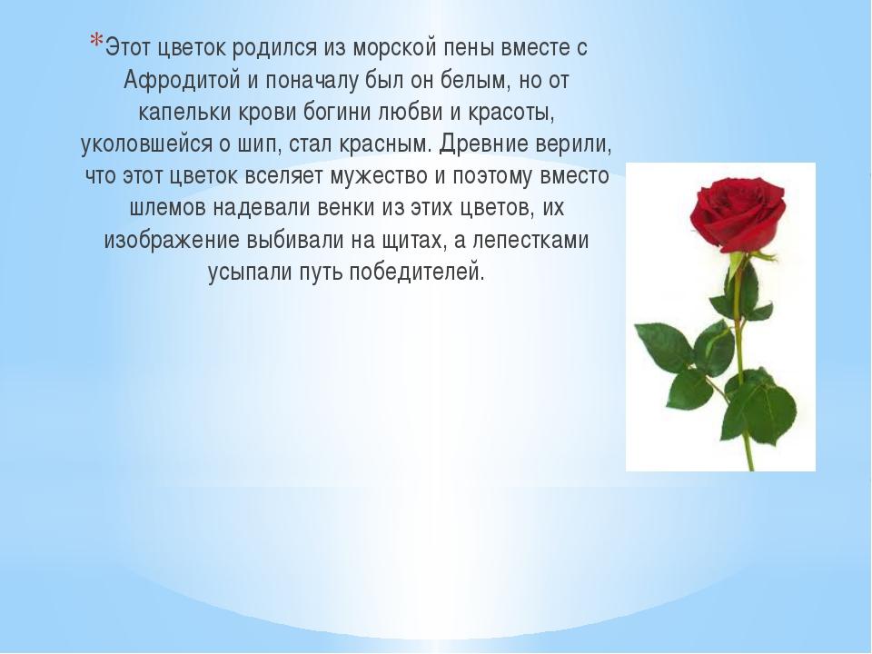 Этот цветок родился из морской пены вместе с Афродитой и поначалу был он бел...