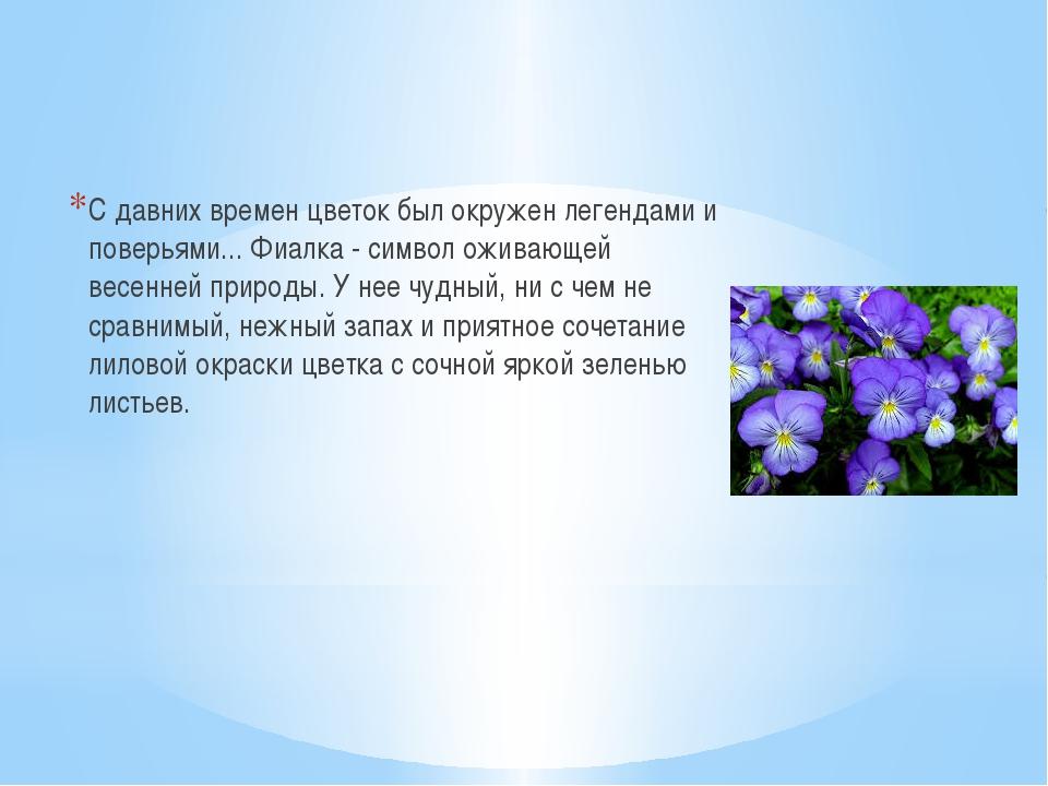 С давних времен цветок был окружен легендами и поверьями... Фиалка - символ...