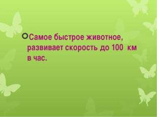 Самое быстрое животное, развивает скорость до 100 км в час.