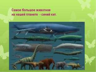 Самое большое животное на нашей планете - синий кит.