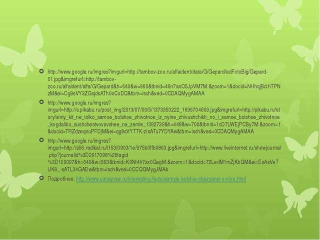 http://www.google.ru/imgres?imgurl=http://tambov-zoo.ru/alfaident/data/G/Gep...