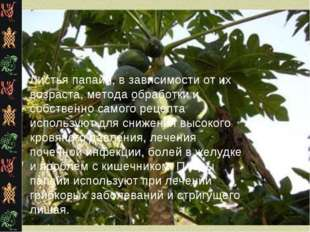 Листья папайи, в зависимости от их возраста, метода обработки и собственно са