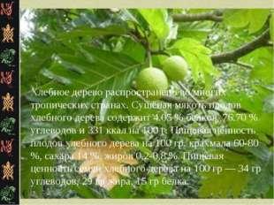 Хлебное дерево распространено во многих тропических странах. Сушёная мякоть п