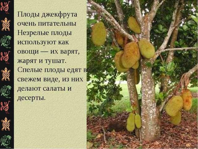 Плоды джекфрута очень питательны Незрелые плоды используют как овощи — их вар...