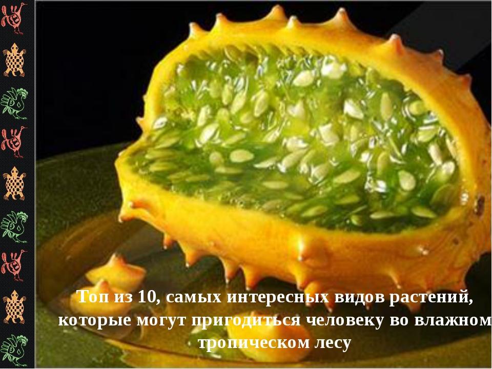 Топ из 10, самых интересных видов растений, которые могут пригодиться человек...