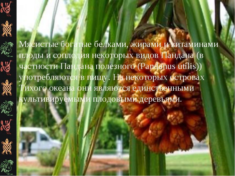 Мясистые богатые белками, жирами и витаминами плоды и соплодия некоторых видо...