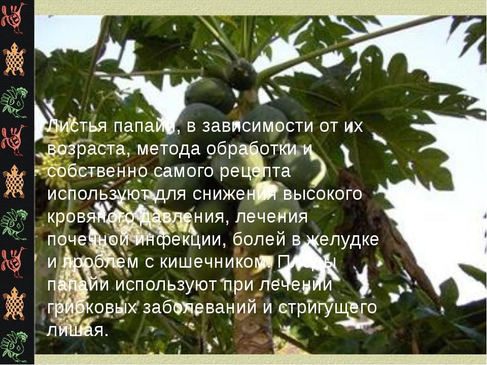 Листья папайи, в зависимости от их возраста, метода обработки и собственно са...