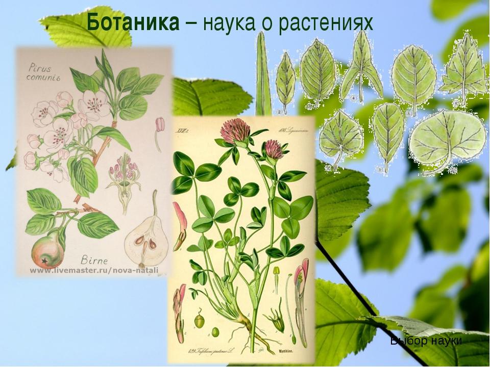 Ботаника – наука о растениях Выбор науки