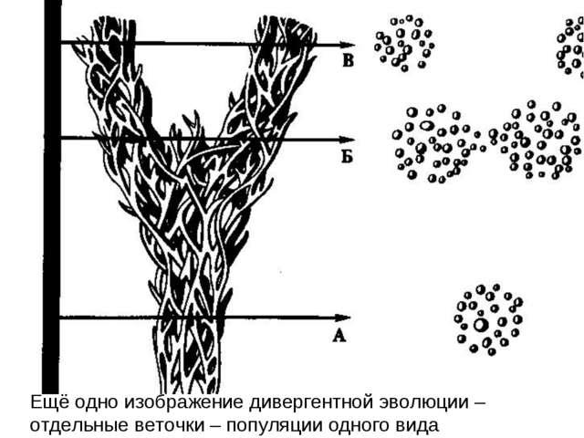 Ещё одно изображение дивергентной эволюции – отдельные веточки – популяции од...