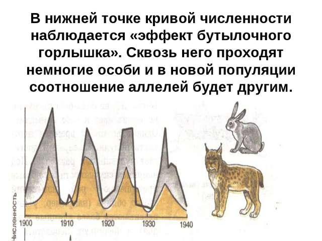В нижней точке кривой численности наблюдается «эффект бутылочного горлышка»....