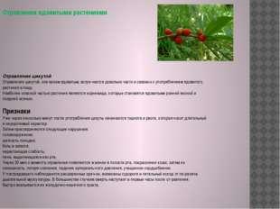 Отравление цикутой Отравление цикутой, или вехом ядовитым, встречается довол