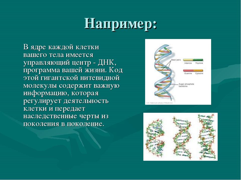 Например: В ядре каждой клетки вашего тела имеется управляющий центр - ДНК,...