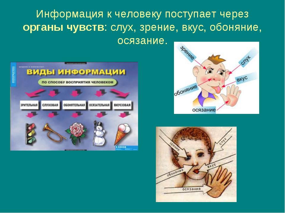 Информация к человеку поступает через органы чувств: слух, зрение, вкус, обон...