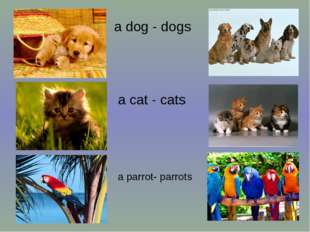 a dog - dogs a cat - cats a parrot- parrots