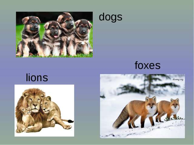 dogs foxes lions