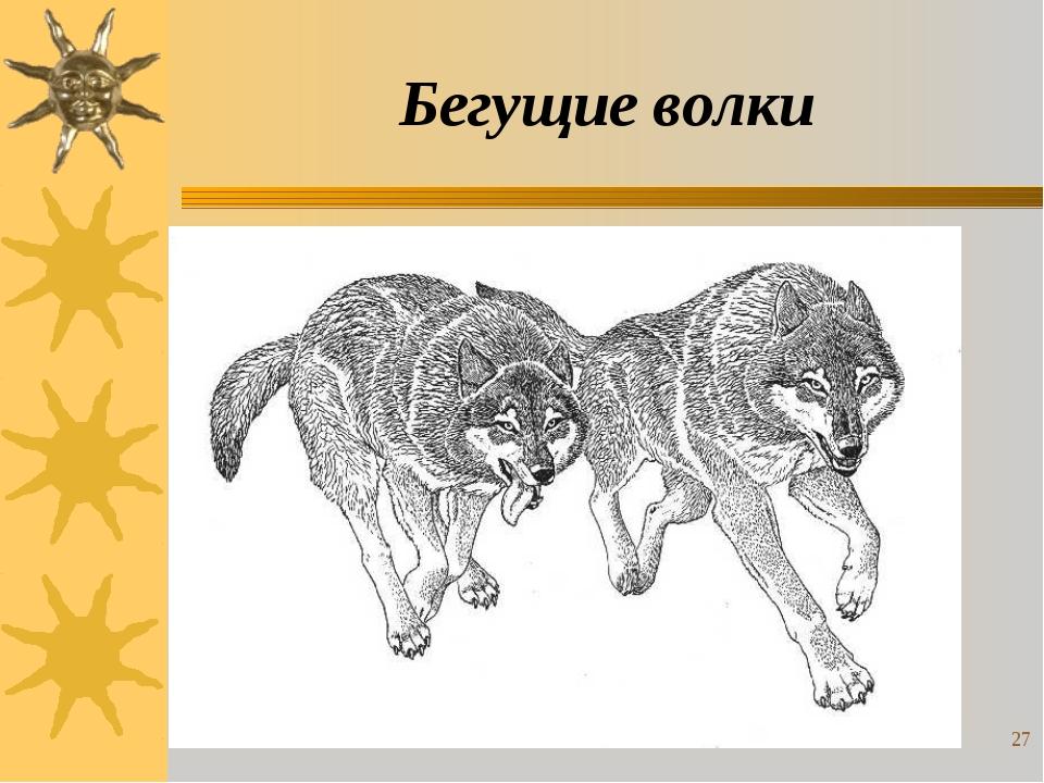Бегущие волки * *