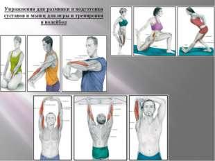 Упражнения для разминки и подготовки суставов и мышц для игры и тренировки в