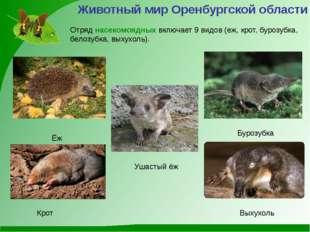 Ёж Бурозубка Животный мир Оренбургской области Крот Выхухоль Отряд насекомояд