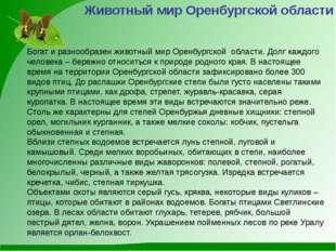 Животный мир Оренбургской области Богат и разнообразен животный мир Оренбургс