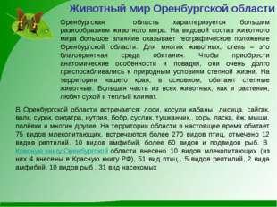 Животный мир Оренбургской области Оренбургская область характеризуется больши
