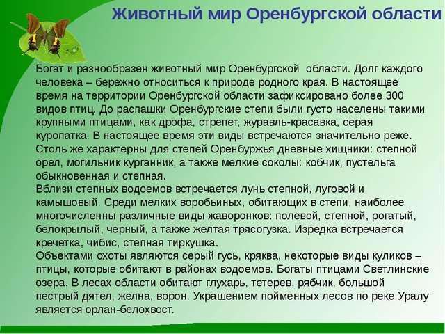 Животный мир Оренбургской области Богат и разнообразен животный мир Оренбургс...