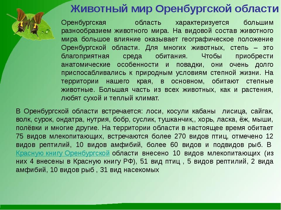 Животный мир Оренбургской области Оренбургская область характеризуется больши...