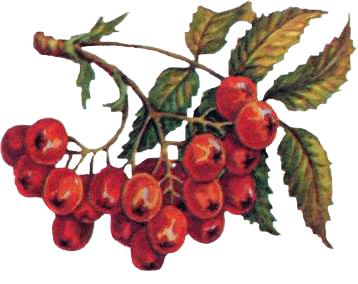 0016-015-Korm-dlja-zimujuschikh-ptits.png