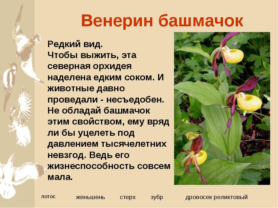 всех редкие растения картинки и описание растения значит