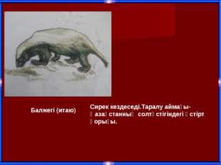 Балжегі (итаю) Сирек кездеседі.Таралу аймағы-Қазақстанның солтүстігіндегі Үст