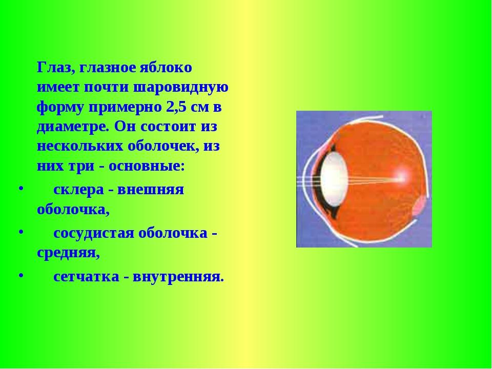 Глаз, глазное яблоко имеет почти шаровидную форму примерно 2,5 см в диаметр...