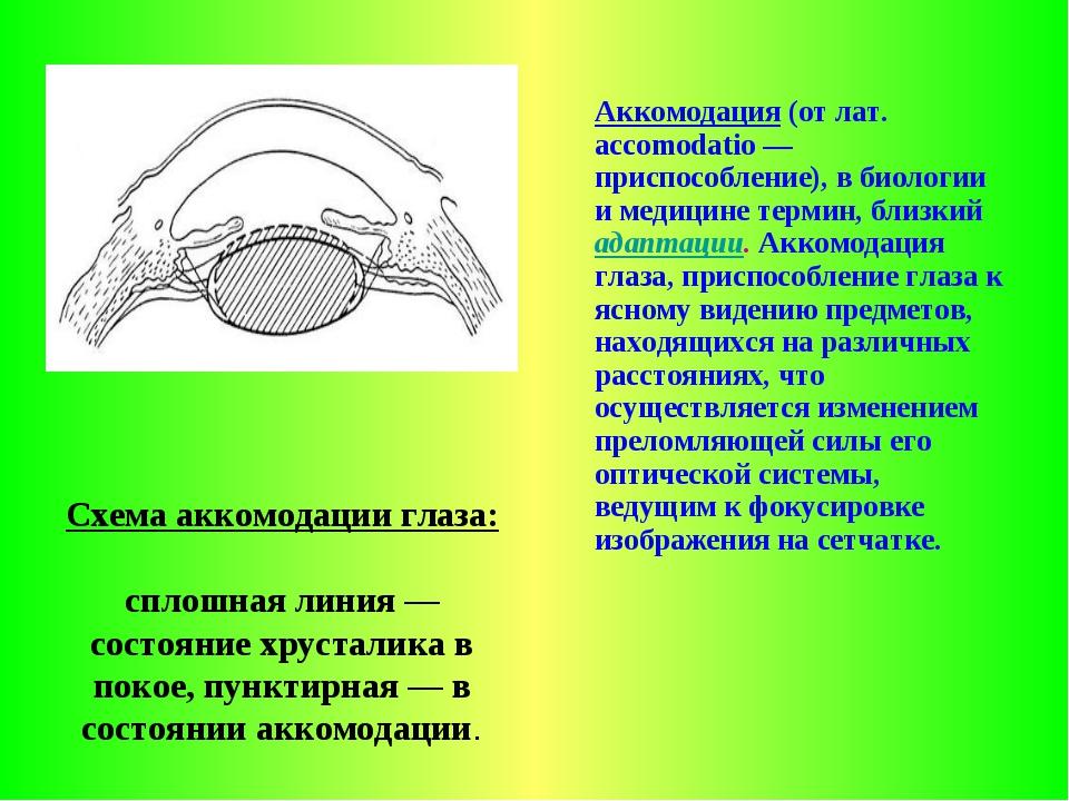 Схема аккомодации глаза: сплошная линия — состояние хрусталика в покое, пункт...