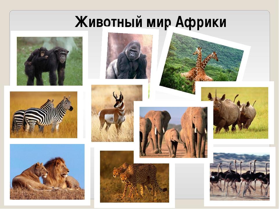 чтобы животный мир африки картинки для презентации зарубежных