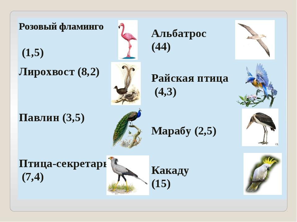 Розовыйфламинго (1,5) Альбатрос (44) Лирохвост (8,2) Райскаяптица (4,3) Павли...
