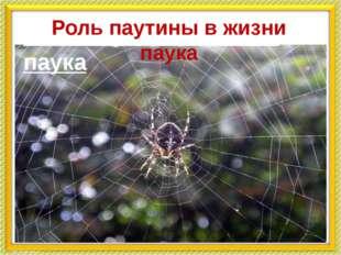 Роль паутины в жизни паука Роль паутины в жизни паука