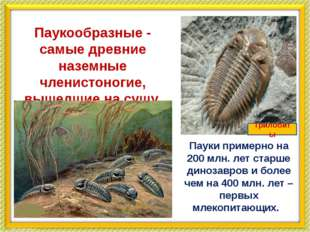 Паукообразные - самые древние наземные членистоногие, вышедшие на сушу. Паук