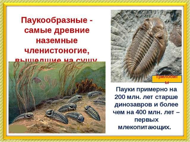 Паукообразные - самые древние наземные членистоногие, вышедшие на сушу. Паук...