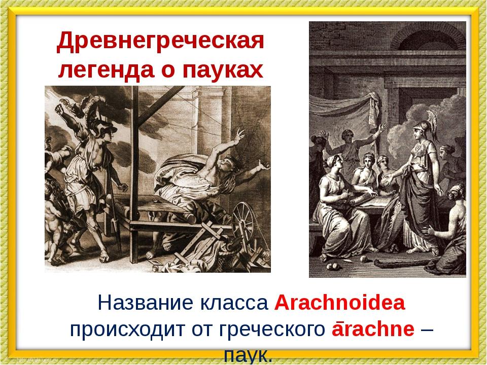 Древнегреческая легенда о пауках Название класса Arachnoidea происходит от г...