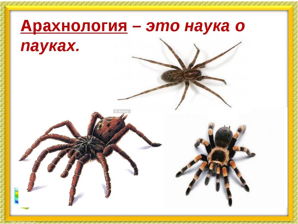 Арахнология – это наука о пауках.