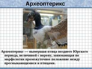 Археоптерикс Археоптерикс — вымершая птица позднего Юрского периода, величино