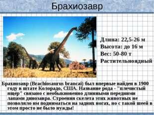 Брахиозавр Брахиозавр (Brachiosaurus brancai) был впервые найден в 1900 году