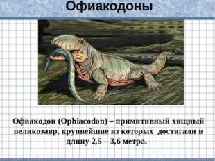 Офиакодоны Офиакодон (Ophiacodon) – примитивный хищный пеликозавр, крупнейшие